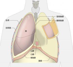 悪性中皮腫発生部位